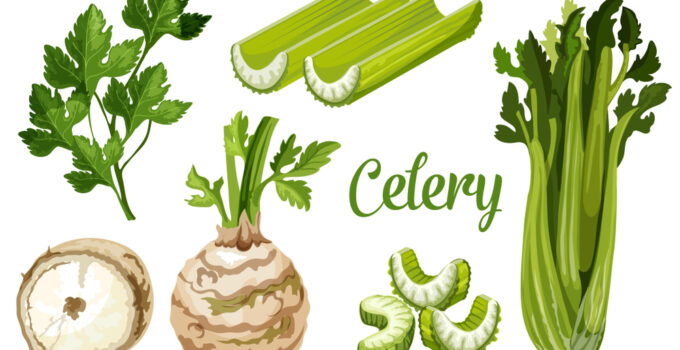 How many stalks of celery in a cup